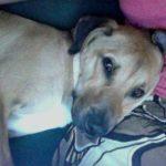 Bella the dog